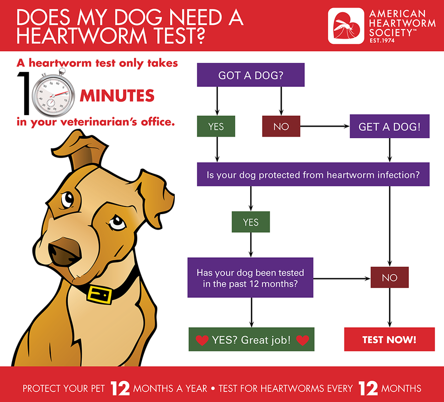 heartworm graphic
